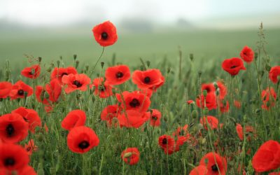 Remembrance Sunday – 12th